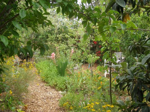 how to grow a camouflaged food-forest