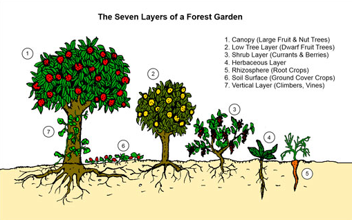 food_forest_layers1